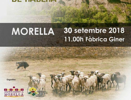 Morella celebra el seu 2n Concurs de gossos de rabera el diumenge 30 de setembre