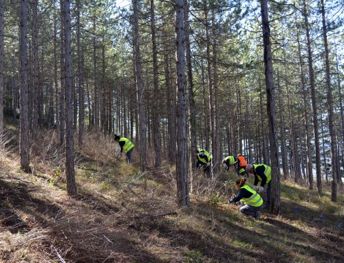El taller d'ocupació per a la conservació de monts comença a treballar a l'Albereda de Morella
