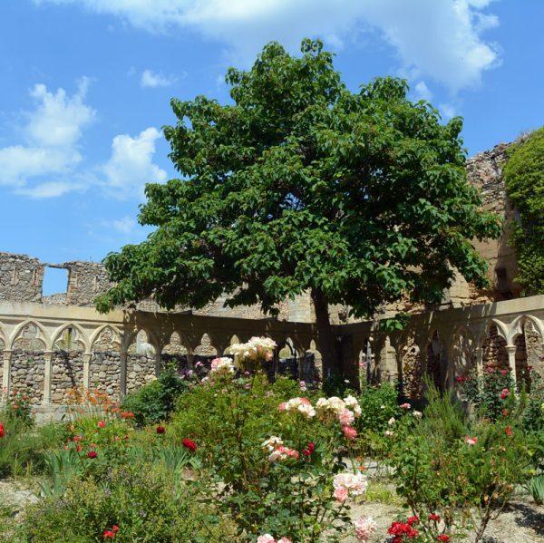 ardí del convent de Sant Francesc