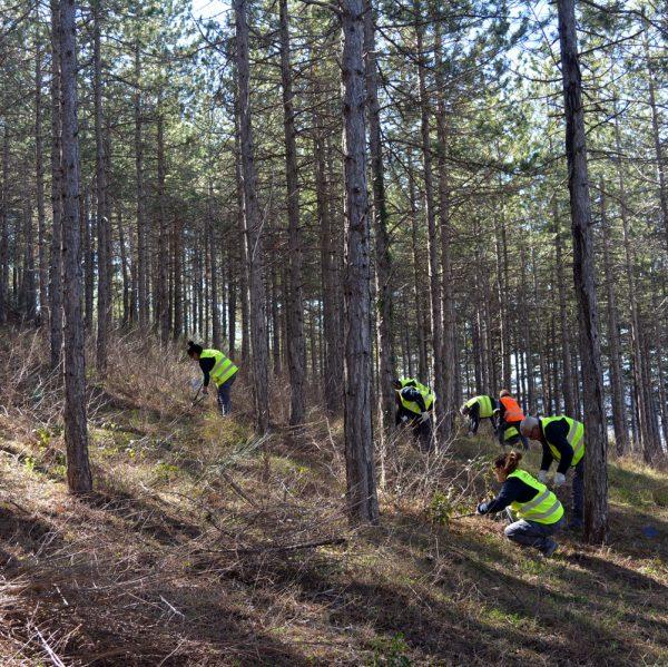 Taller d'ocupació de millora forestal a Morella